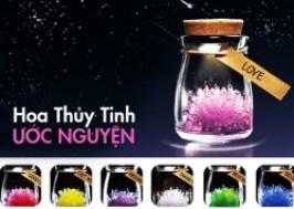 TP. HCM - Tân Bình: Giảm giá 43% - Hoa thủy tinh ước nguyện
