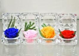 Hà Nội - Hai Bà Trưng: Giảm giá 44% - Hoa hồng bất tử Daros