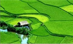 Tour du lịch Hà Nội - Thung Nai - Hà Nội 02 ngày 01 đêm - 1 - Du Lịch Trong Nước - Du Lịch Trong Nước