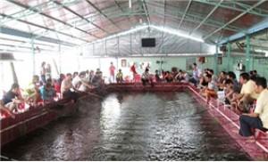 DV câu Tôm tại CLB câu Tôm Càng Xanh 1A - 1 giờ - miễn phí chế biến