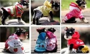 Combo 02 bộ đồ cho thú cưng ấm áp và dễ thương trong mùa đông
