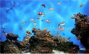 Khám phá Tour VIP lặn ngắm san hô và câu cá tại Nha Trang 1 ngày - 4 - Du Lịch Trong Nước