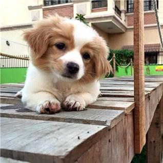 Cùng Mua - The VIP 3 thang tai Khu vui choi thu cung - DOGS Playground