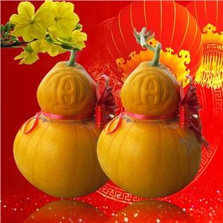 Cùng Mua - Cap dua háu hò lo (1.8kg/2.4kg) mùng xuan, bu them tien