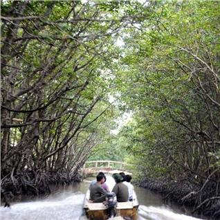 Cùng Mua - Tour trai nghiem cano xuyen rung sac - Khu bao ton 1N1N