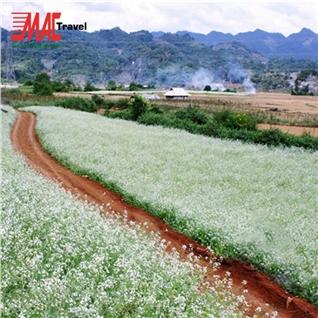 Cùng Mua - Tour Ha Noi - Moc Chau mua hoa cai trang - 2N1D - MAC Travel