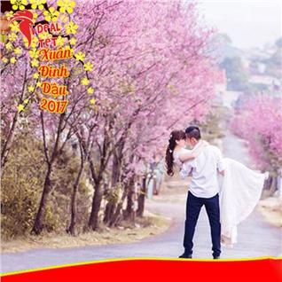 Cùng Mua - Tour Tet Da Lat 3N3D - hoa nhip le hoi hoa anh dao