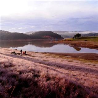 Cùng Mua - Tour Tet Da Lat - Vuon Hoa Lavender- Cu Lan - Buffet Rau 3N3D