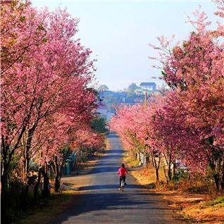 Cùng Mua - Tour Da Lat - Hoa va Nang 3N3D
