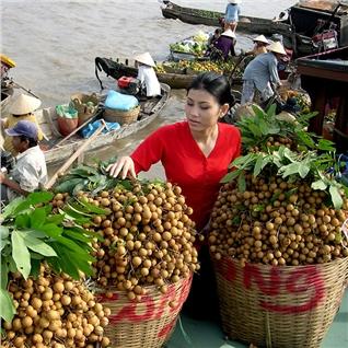 Cùng Mua - Tour Mien Tay:My Tho- Ben Tre- Can Tho- Cho noi-My Khanh 2N1D