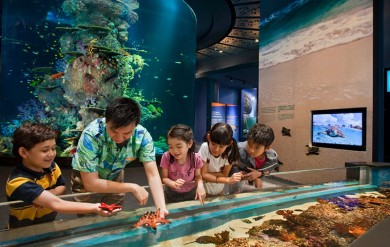 Đất Việt Tour - TOUR DU LICH SINGAPORE: S.E.A AQUARIUM – GARDENS BY THE BAY