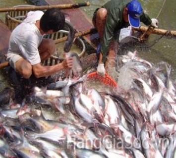 Khô cá Tra tẩm gia vị