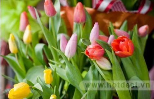 Tô Điểm Cho Phòng Khách Thêm Phần Sang Trọng Tinh Tế Với Chậu Hoa Tulip Tươi Đà Lạt. Voucher 250.000đ Chỉ Còn 130.000đ. Giảm 48%