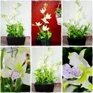 Chậu hoa lan bằng đất sét Nhật