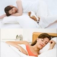 Ruột gối bông êm ái cho giấc ngủ thêm sâu