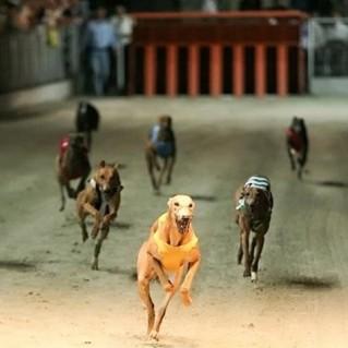 Vé xem đua chó tại Vũng Tàu - Sự Kiện