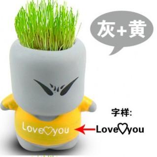 Combo 2 chậu cỏ tóc cho không gian sống động