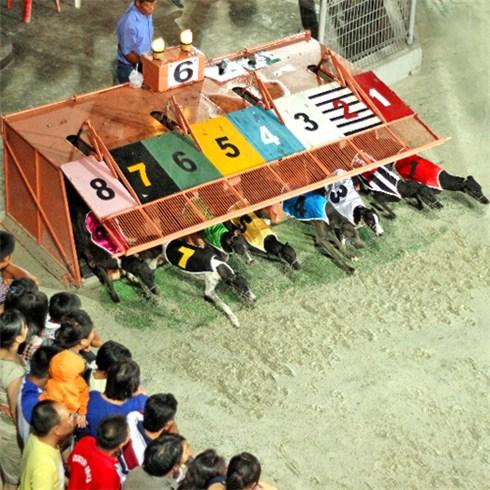 Combo 2 vé xem đua chó tại sân vận động Lam Sơn - Vũng Tàu
