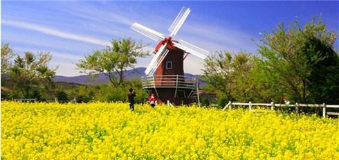 Nhóm Mua - Tour don trung thu Han Quoc - Seoul - Dao Nami 5N4D