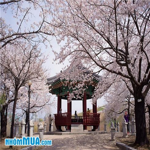 Tour Hàn Quốc - Seoul - Nami - Everland 4N4Đ