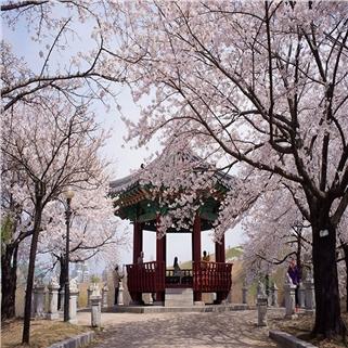 Nhóm Mua - Tour Han Quoc - Seoul - Nami - Everland 4N4D