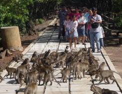Chuyến du lịch khám phá Cần Giờ - Đảo Khỉ