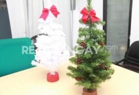 Cây thông Noel 70 cm