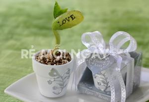 20 hạt đậu với nhiều thông điệp yêu thương