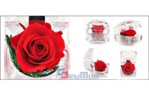 Hoa hồng tình yêu bất tử giá chỉ có 98.000đ. Được đựng trong hộp trong suốt mica với giác cắt Kim Cương làm nổi bật vẻ đẹp bông hồng bên trong. Hương sắc vĩnh cửu, món quà tuyệt diệu của tình yêu trong những dịp lễ. - Gia Dụng
