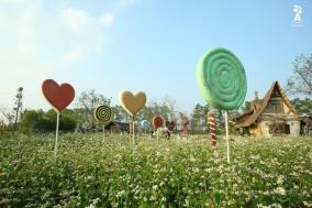 Ngắm hoa Tam Giác Mạch đẹp ngỡ ngàng tại Hà Nội (khỏi cần tới Hà Giang) | Tin Khuyen Mai